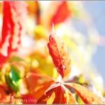 Autumn's Arrival {Art & Soul Tuesdays}