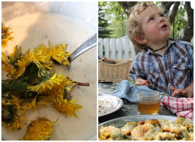 Collage image of dandelion flowers in batter, and a young boy at a table with dandelion fritters to eat.