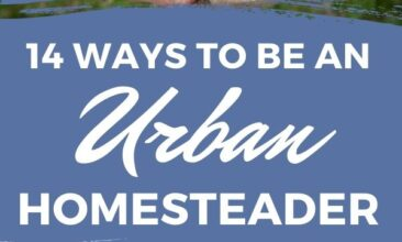"""Pinterest Pin with two images. The first image is a plant growing out of a crack in the concrete. The second image is of a two hands holding tomatoes in them. Text Overlay says """"14 Ways to Be an Urban Homesteader"""""""