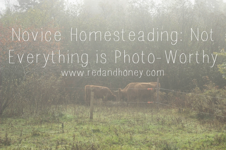 Novice Homesteading: Not Everything is Photo-Worthy (a great read on the realities of the seemingly idyllic farm life that so many aspire to these days)