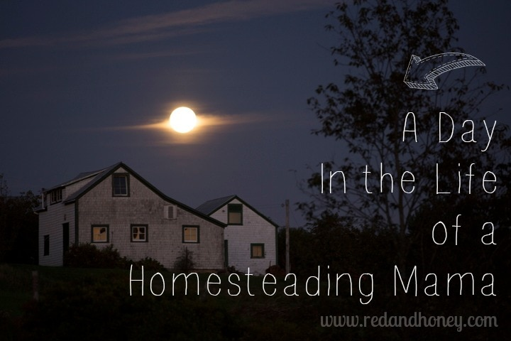 homesteadingdayinthelife