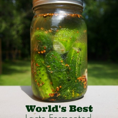 World's Best Lacto-Fermented Garlic Dill Pickles