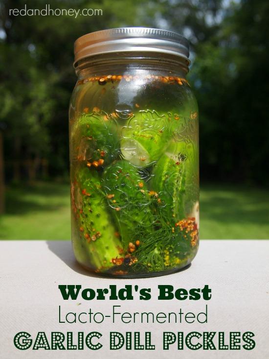 Worlds Best String Bikini Bottoms: World's Best Lacto-Fermented Garlic Dill Pickles