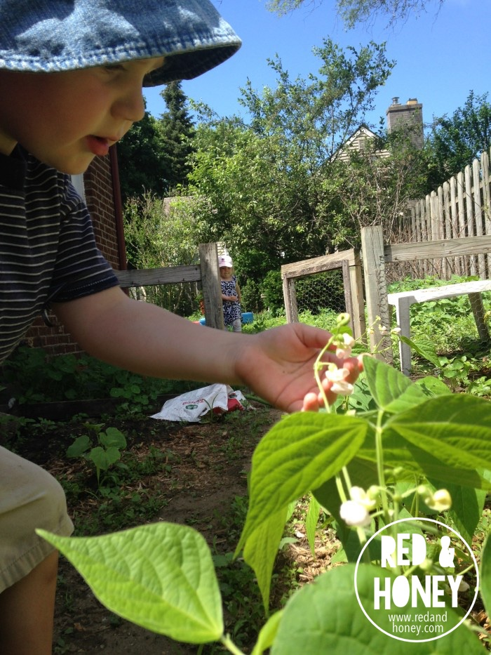 Growing Little Gardeners1