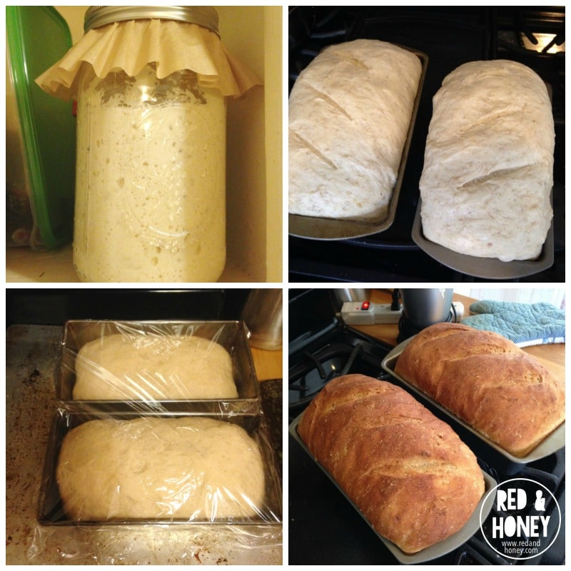 Adventures in Sourdough - R&H 1