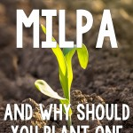 What is a Milpa, and Why Should You Plant One in Your Garden This Year?