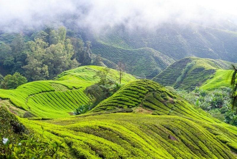 5 Incredible Benefits of Matcha Green Tea