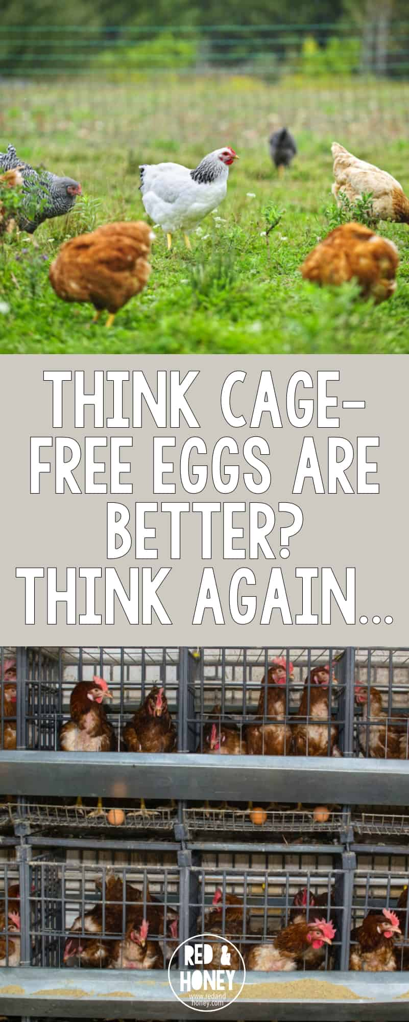 Cage free eggs pin