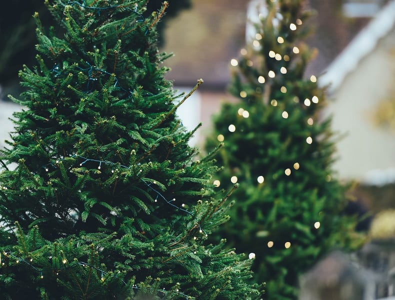 Eco-Friendly Holiday Decor in 5 Areas of Your Home