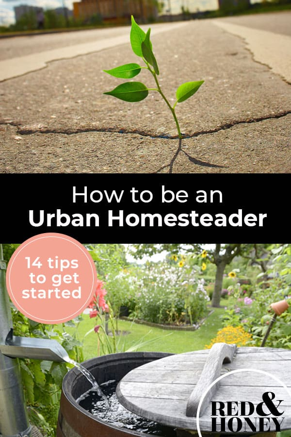 Pinterest Pin with two images. The first image is a plant growing out of a crack in the concrete. The second image is of a backyard rain catching barrel with a beautiful flower garden in the background.