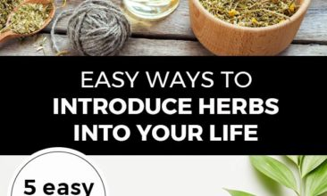 """Pinterest pin with two images. Top image is of multiple bowls of herbs. Second image is of two bottles of essential oils and fresh herbs. Text overlay says, """"Easy Ways to Introduce Herbs Into Your Life: 5 easy steps!"""""""