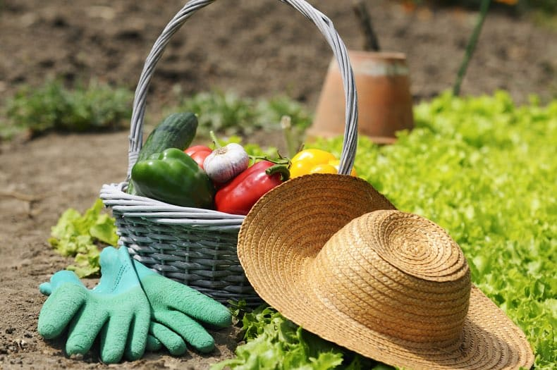An image of a basket full of vegetables and resting on the ground near a garden patch. A straw hat and gardening gloves sit by the basket.